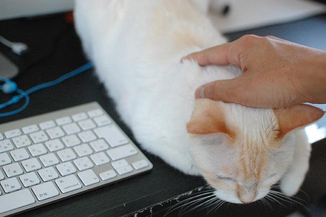ふかふかマウス(猫やけど)