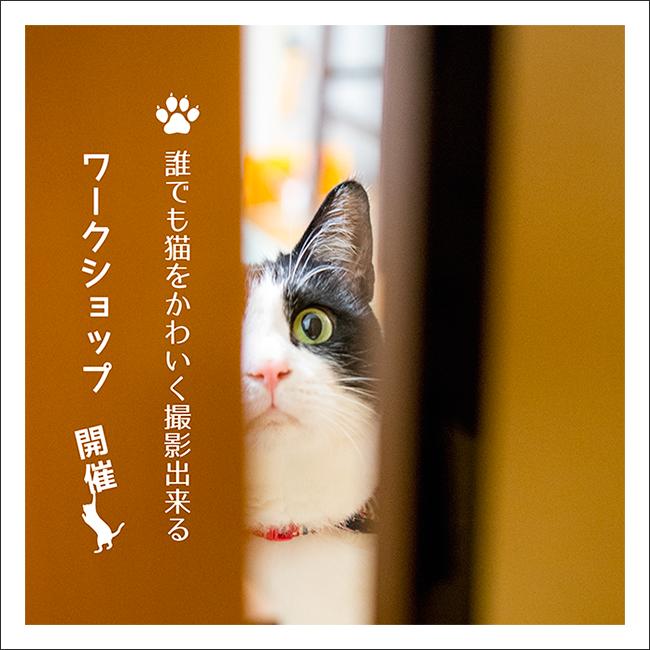 猫の撮り方