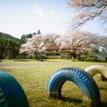学校と桜と青空とカラータイヤ