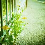 ひっそりと頑張っている花が好き