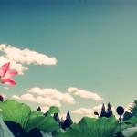 HORIZONと蓮とCINEフィルム