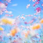 【大阪10/13(金)】ゆるふわ写真の撮り方(和泉リサイクル公園)