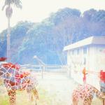 コスモス柄の動物園