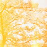光漏れ+早咲きの桜
