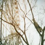 木登り猫と観覧車