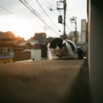 【東京WS】続・ノスタルジックが止まらない〜谷中二日目