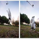 かわいい猫の撮り方レシピ「ジャンプ猫を撮る」
