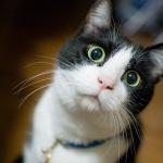 全国の『ローソン』にて猫写真のプリントが出来るようになりました