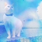 かわいい猫の撮り方最終話「iPhoneでの編集・加工」