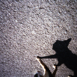 フィルムコラムは「猫の撮り方」で締め