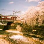 桜の撮り方コラム