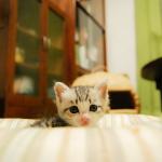 猫を撮るならノンフラッシュで