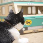リアル猫の宅急便〜その2