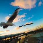 デジタルで夕暮れカモメをトイカメラ風に撮影