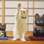 我が家の招き猫について