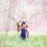 和泉リサイクル環境公園の枝垂れ梅