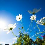 コスモスの咲くお寺で『光』をテーマに個人レッスン〜3