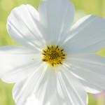 コスモスの咲くお寺で『光』をテーマに個人レッスン〜2