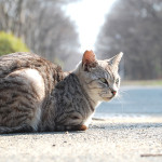 かわいい猫の撮り方レシピ【外猫編2】
