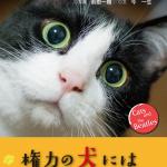 【告知】『猫とビートルズ』出版!!念願叶って我が子が写真集デビュー☆