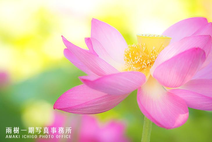 _flower-001