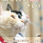 猫写真集「前を向きニャさい!」発売!!